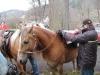 Projížďky na koních