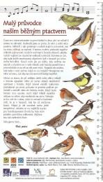 Malý průvodce naším běžným ptactvem I