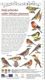 Malý průvodce naším běžným ptactvem II