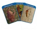 Karty vodních organismů – Sada vzdělávacích karet pro MŠ