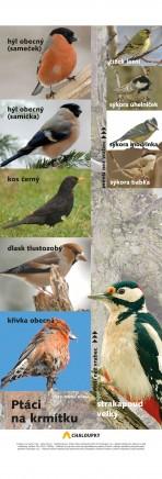Ptáci na krmítku – plakáty