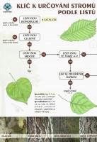Klíč k určování stromů podle listů