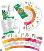 Určovací klíč – Les rostliny