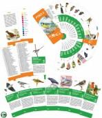 Určovací klíč – Ptáci 2